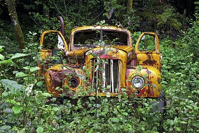 Yellow-Truck-in-the-Bush
