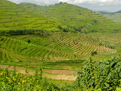 Terraced hillside suitable for agriculture.