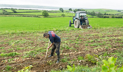 Irish Farmer 1 RX102474