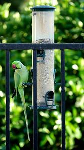 RX107278 Bird