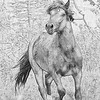 This sketch was done in photoshop from the original picture.  I like how it highlights the stallion and brings out some of the details.