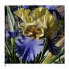 Boysenberry and Buttercup Iris. Corel Painter.