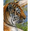 """A more abstract """"Oil Pastel"""" version of the tiger."""