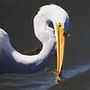 IMG_1687_egret_fish