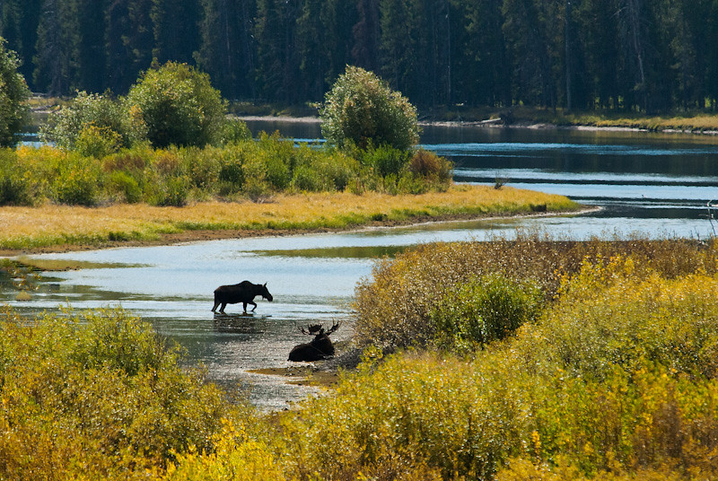 Grand Teton, Moose, Oxbow Bend