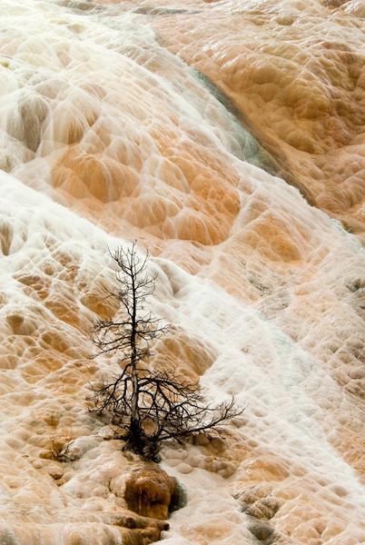 Geyser Basin at Yellowstone NP