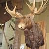Moose<br /> Pioneer Museum in Lynden, WA