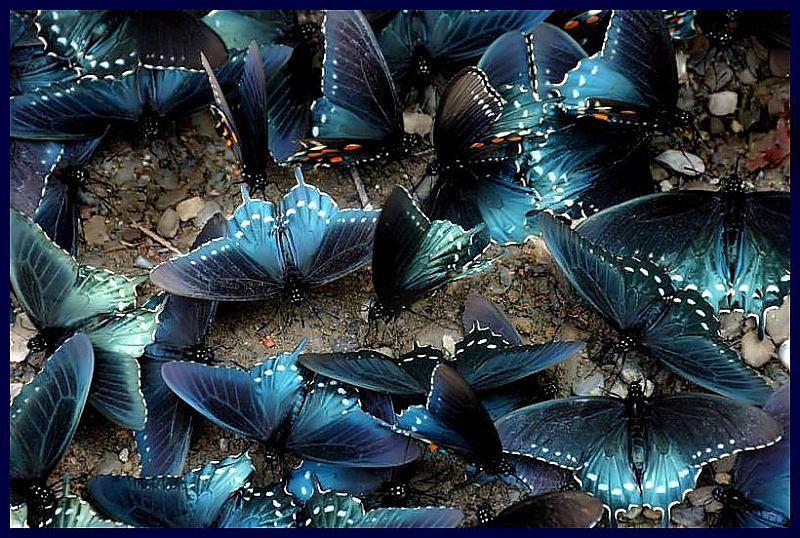 A Bunch of Butterflies