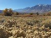 Mt. Tom stands tall above the Owens Valley.