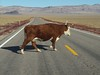 Why did the cow cross the road???