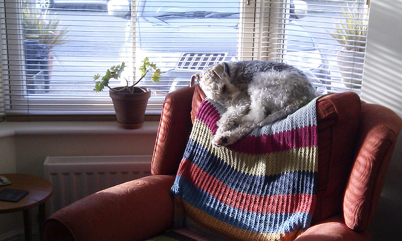 Ralf, the B&B dog, looking remarkably at home in his sunny spot.   It is obviously not the first time he has done this!