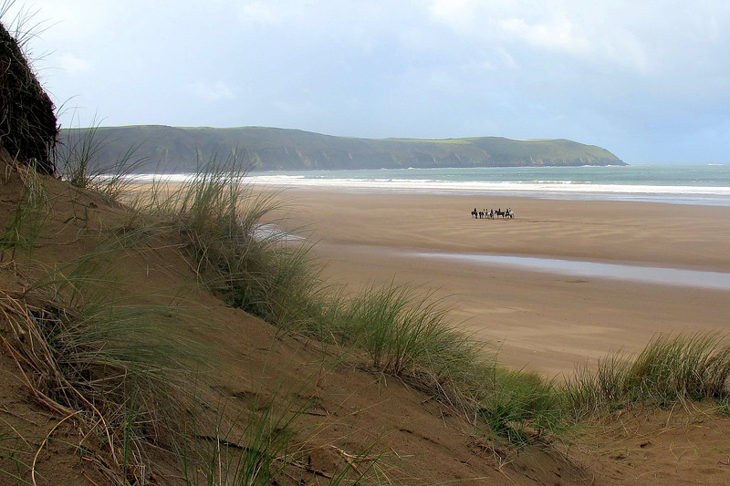 Horses being exercised on Woolacombe Beach
