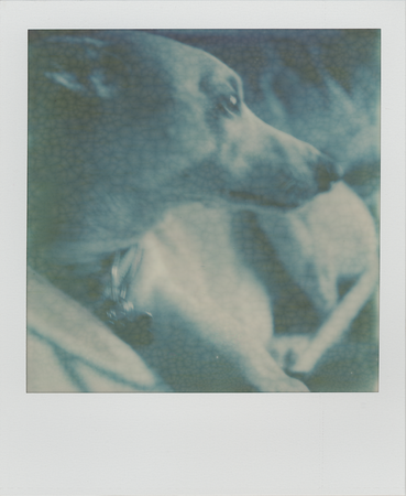 SX-70 camera with Impossible Project PX70 Film