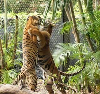 Safari nights pb zoo 8 3 2012