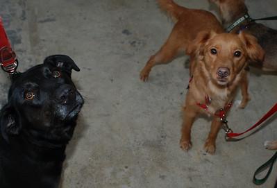 Safe Hands Benefit - Kentucky Dogs reunited!