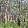 Jarrah Forest - Margaret River