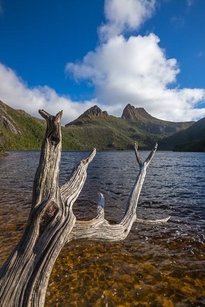 dead tree Dove Lake Cradle Mountain