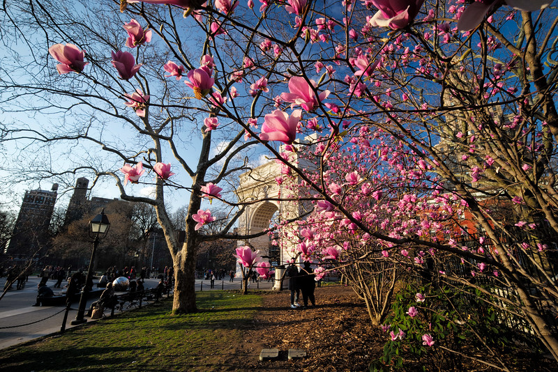 close to the Magnolias Washington Square