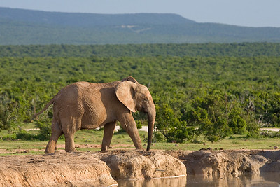 Addo vista with elephant