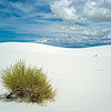 lone desert shrub White Sands
