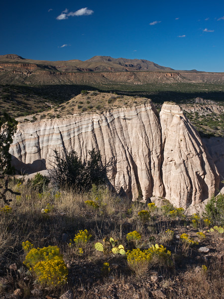 cactus and Tent Rocks 1