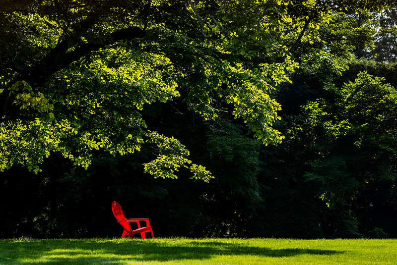 red chair beneath tree