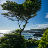 backlit cypress on Wild Pacific Trail