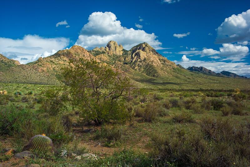 barrel cactus & Organ Mountains