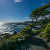 Wild Pacific Trail backlit