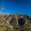 gnarly tree Hailstone Trail Chiricuaha