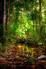 Rainforest Stream, Daintree National park, Queensland, Australia
