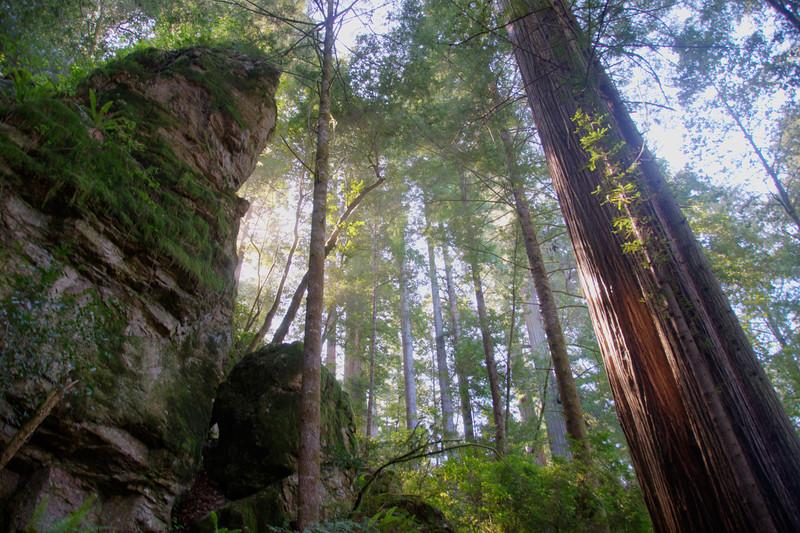 Jedidiah Smith Trail