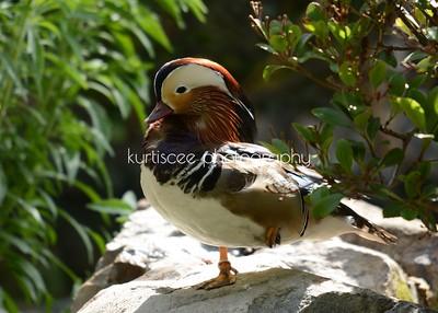 San Diego Zoo / San Diego Safari Park  2013
