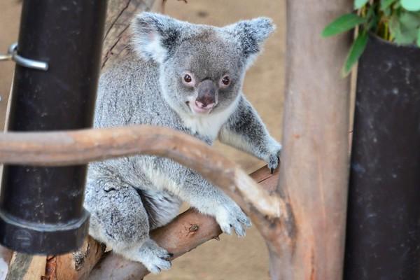 San Diego Zoo January 2013