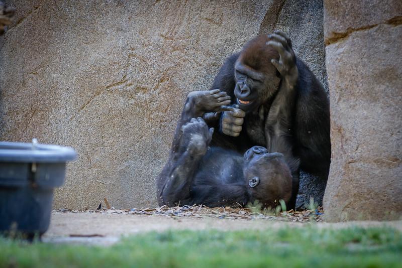 SD Zoo 2016-296