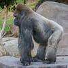 SD Zoo 2016-378