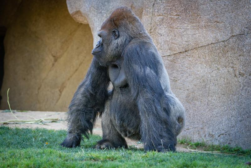 SD Zoo 2016-113