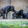 SD Zoo 2016-244