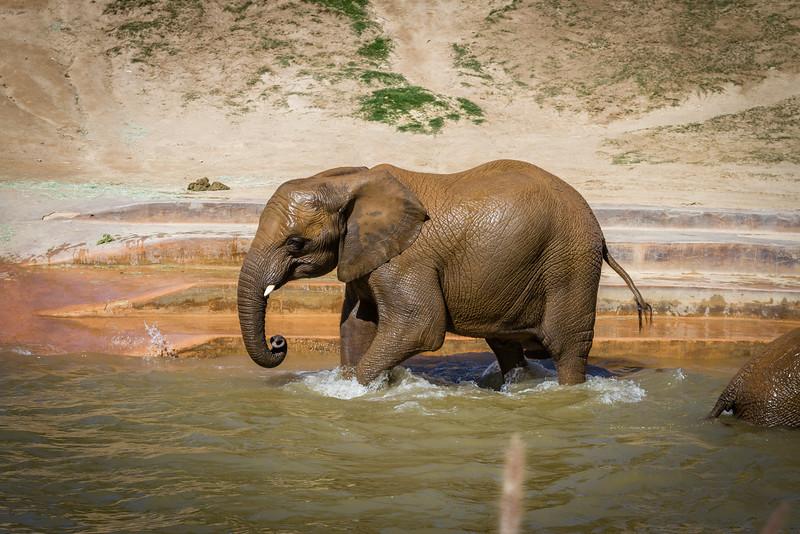 SD Zoo 2016-326