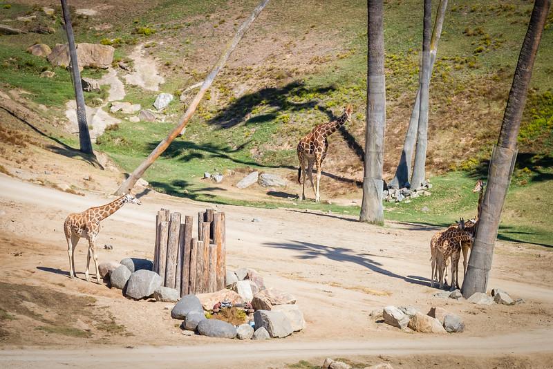 SD Zoo 2016-245