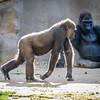 SD Zoo 2016-144