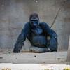 SD Zoo 2016-285