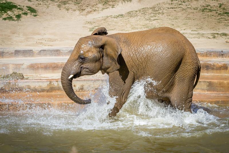 SD Zoo 2016-266