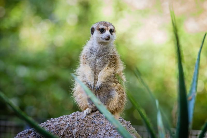 SD Zoo 2016-172