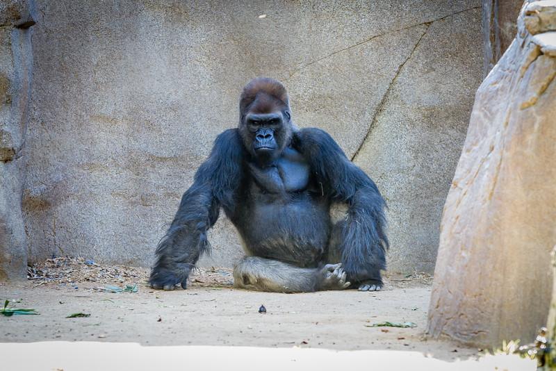 SD Zoo 2016-45