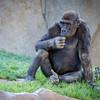 SD Zoo 2016-289