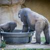 SD Zoo 2016-361
