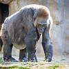 SD Zoo 2016-70