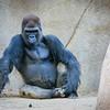 SD Zoo 2016-276