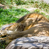 SD Zoo 2016-139